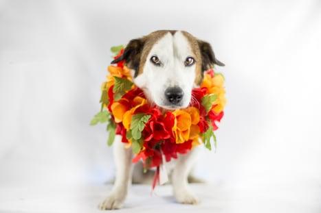 Canva - Closeup Photo of Adult Medium Size Dog