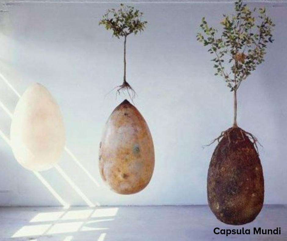 Capsula Mundi (2)